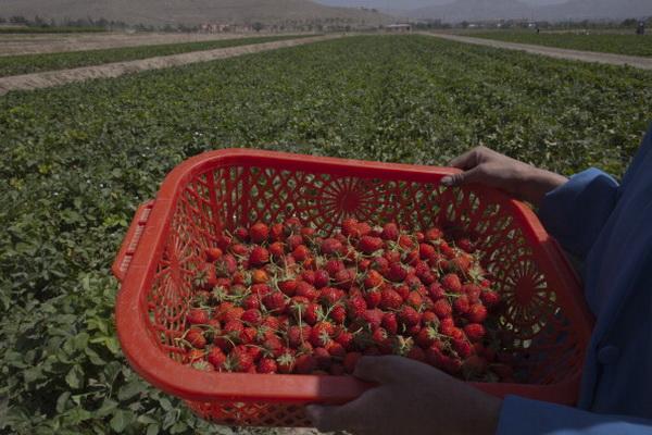 Фоторепортаж о деятельности женщин в Афганистане. Фото: Paula Bronstein /Getty Images