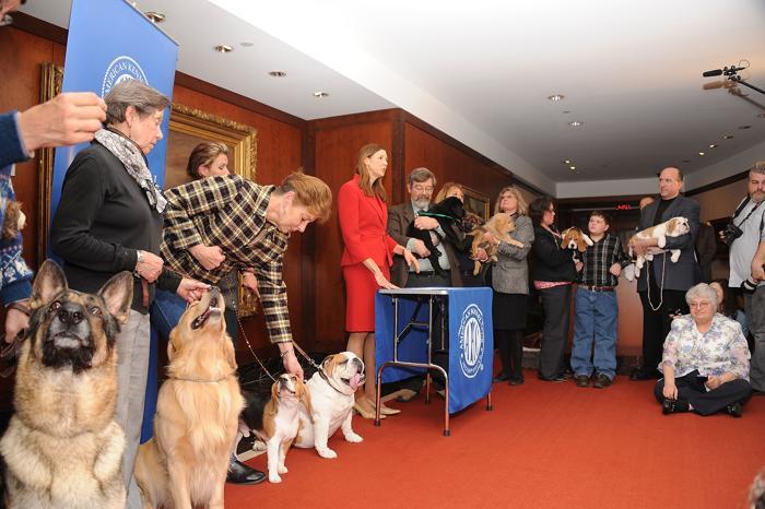 Пресс-конференция клуба собаководов США в Нью-Йорке, 30 января 2013 года. Фото: Gary Gershoff/Getty Images for the American Kennel