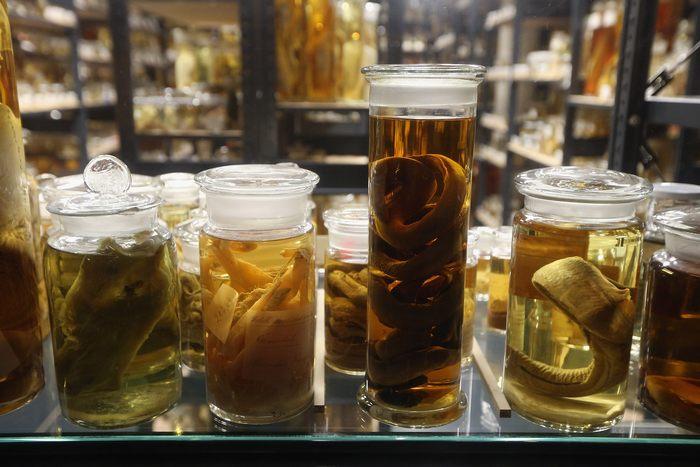 В восточном крыле Музея естествознания Берлина, восстановленном в 2010 году, представлены 276 000 стеклянных цилиндров на полках общей длиной 12,6 км. Фото: Sean Gallup/Getty Images