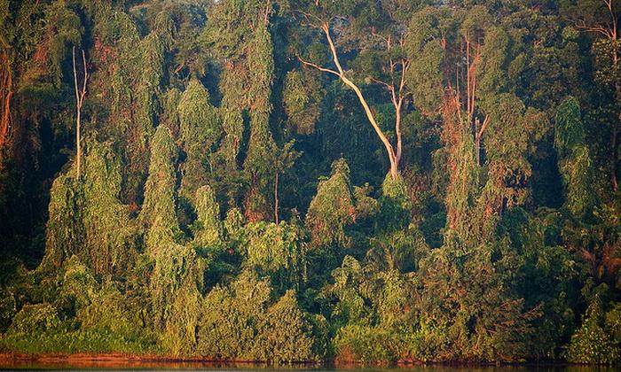 «Леса на планете влияют на многие важные аспекты экосистемы, такие как регулирование климата, наличие двуокиси углерода в атмосфере, биоразнообразие или водоснабжение», — пишет ведущий автор исследования Мэтью Хансен, США, штат Мэриленд. Фото: Pen Araneae/flickr.com