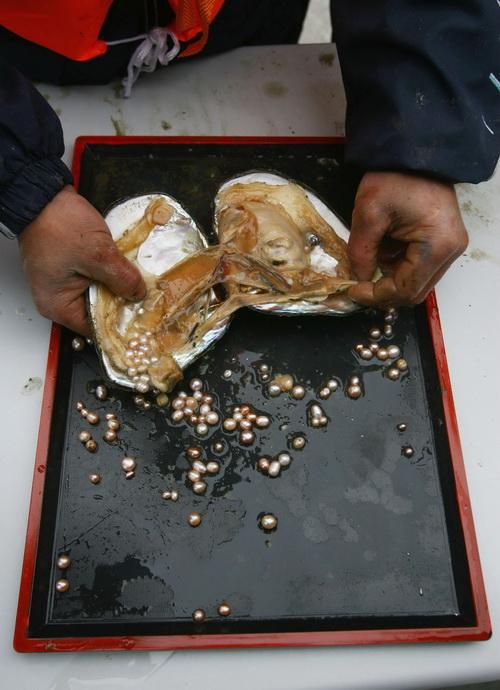 Рабочий извлекает жемчужины в Наньцзине, провинция Цзянсу, 18 апреля 2006 г. Фото: China Photos/Getty Images