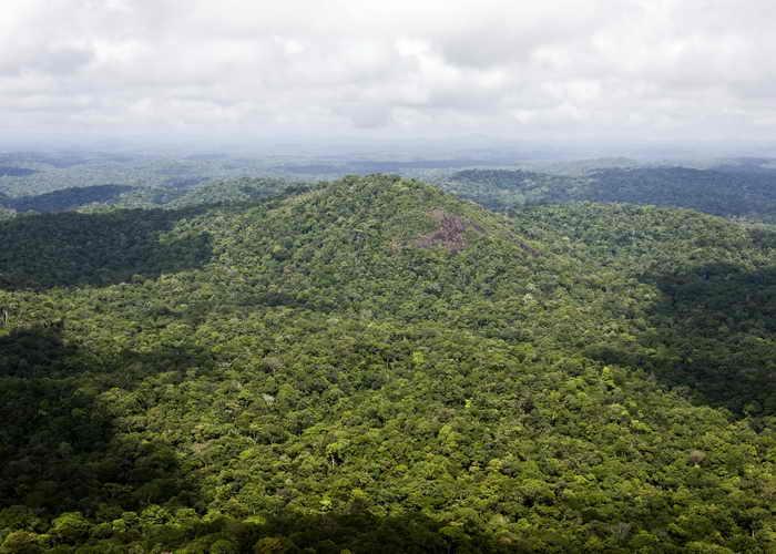 Амазония. Фото: JODY AMIET/AFP/Getty Images