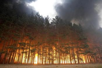 Пожароопасный сезон открыт.Фото:ARTYOM KOROTAYEV/AFP/Getty Images