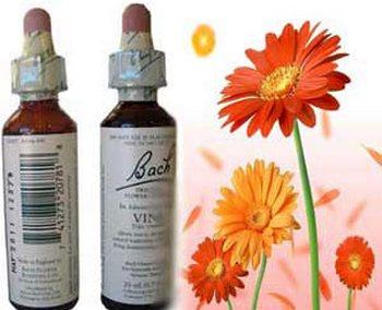 О цветочной терапии Баха. Фото с homeo-sar.ru