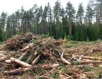 «Братская могила» нашего леса, поселок Семиозерье. Фото: Светлана Корсакова/Великая Эпоха
