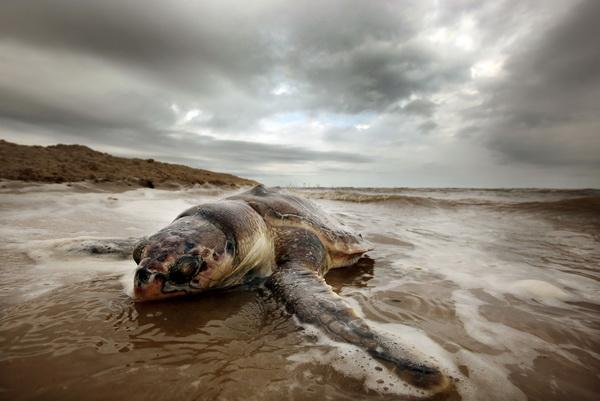 Апрель с Землей не шутит. Обзор. Фото: Mario Tama/Getty Images