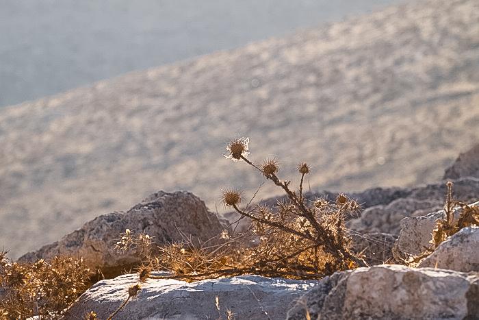 Поход в Мар Сабу. Фото: Хава Тор/Великая Эпоха (The Epoch Times)