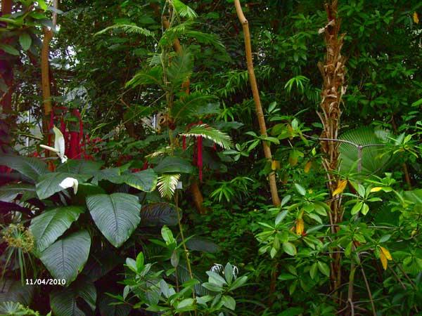 Тропическая оранжерея. Ботанический сад Рурского университета Бохум. Фото: Сергей Ярош.