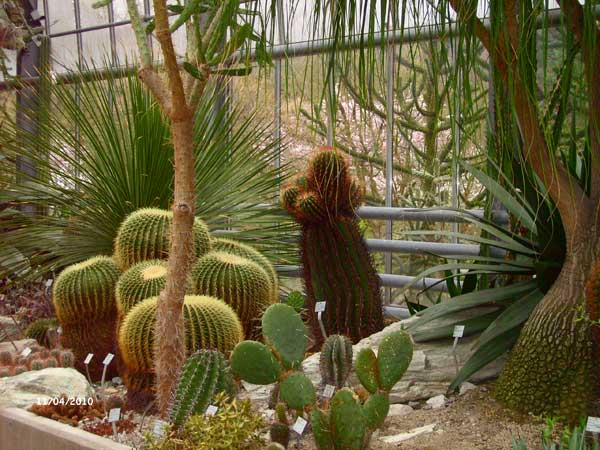 Растительность пустыни. Ботанический сад Рурского университета Бохум. Фото: Сергей Ярош.