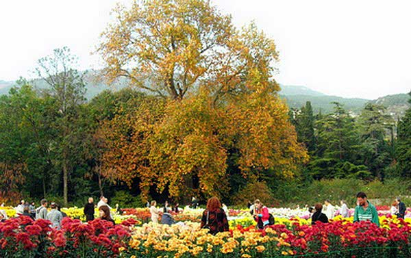 Выставка хризантем в Никитском ботаническом саду. Фото: Алла Лавриненко/Великая Эпоха