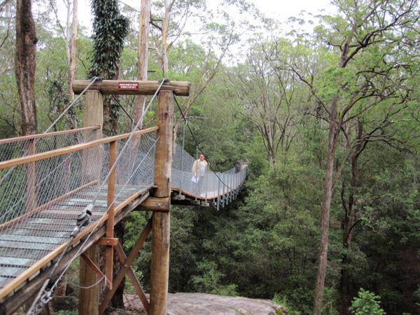 Австралия. Для прогулки по тропическому лесу построены подвесные дорожки.  Фото: Евгений Добрыгин