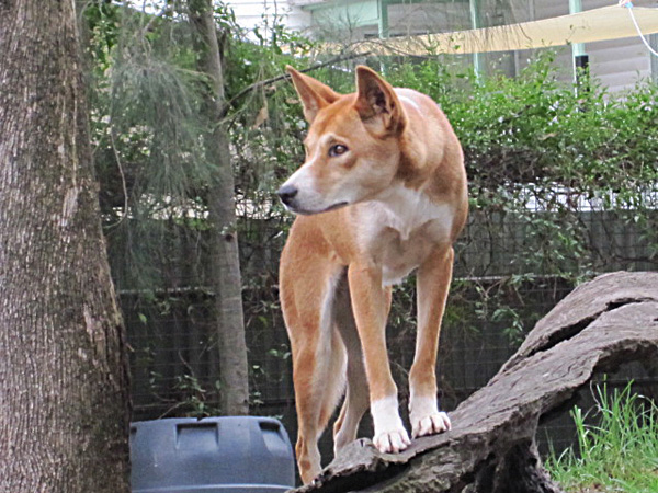 Австралия.  Богатый животный мир.  Фото: Евгений Добрыгин