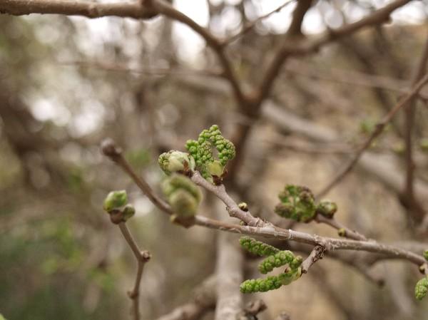 Пробуждение природы. Фото: Хава Тор/Великая Эпоха/The Epoch Times