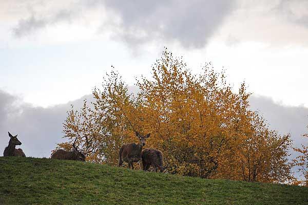 Австрия. Гора Пфандер. Фото: Екатерина Кравцова/Великая Эпоха