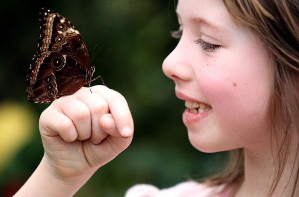 Вновь появившиеся бабочки разлетелись по всему выставочному павильону. Фото: Dan Kitwood/Getty Images