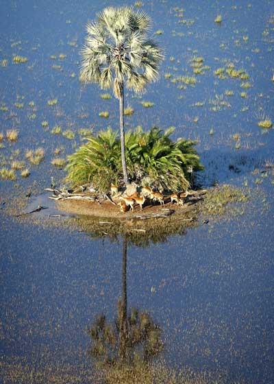 Бодсвана – страна нетронутой природы. Фото: Chris Jackson/Getty Images