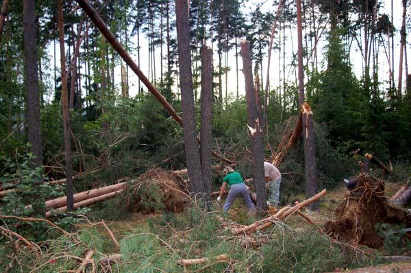 Последствия урагана под Приозерском. Фото: Ирина Оширова/Великая Эпоха