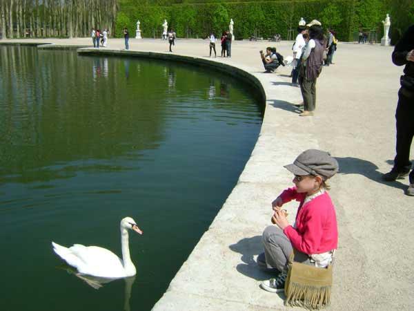 В Версале живут лебеди. Фото: Ирина Павловская/Великая Эпоха