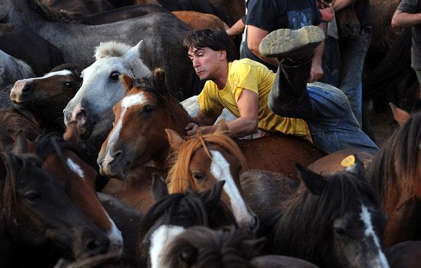 Нелегко приручить дикую лошадь. Фото: Denis Deule/Getty Images