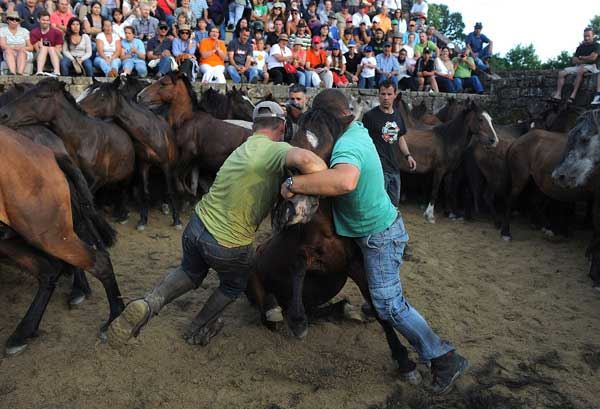 За приручением диких лошадей в загоне наблюдают зрители. Фото: Denis Deule/Getty Images