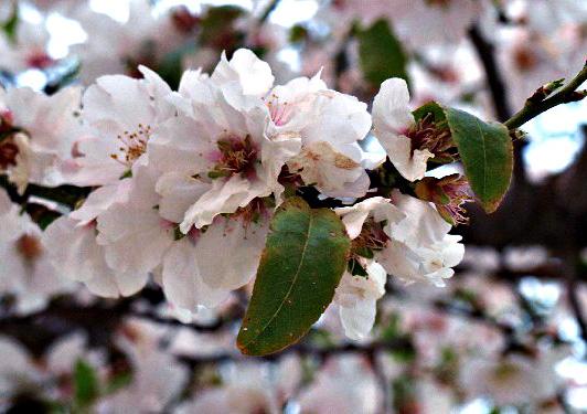 Скромное обаяние зимних цветов. Фото: Хава Тор/Великкая Эпоха/The Epoch Times