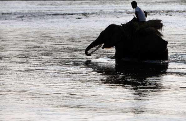 Национальный парк Непала. Фото: PRAKASH MATHEMA/AFP/Getty Images