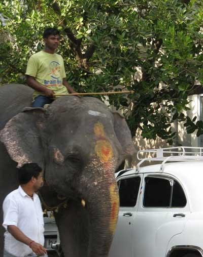 Слониха по имени Лакшми живет при храме Ганеша в Пондичери (Индия). Фоторепортаж. Фото: Татьяна ВИНОГРАДОВА. Великая Эпоха (The Epoch Times)