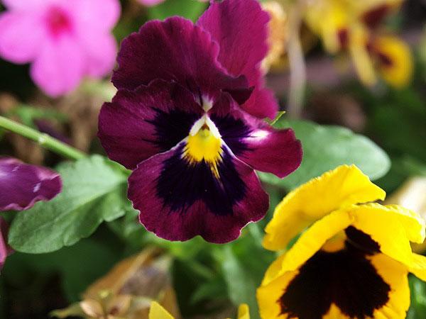 Дарите женщинам цветы, Фото: Хава Тор/Великая Эпоха