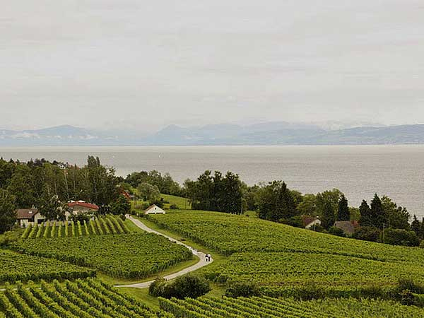 Виноградная тропа -  от Меерсбурга до Хагнау. Фото: Николай Богатырев