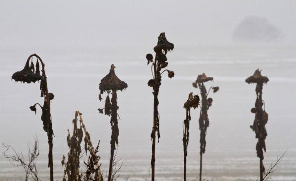 Зимние мотивы. Фото: FRANK RUMPENHORST/Getty Images