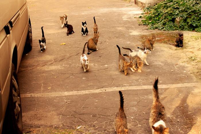 У нас во дворе живут кошки. Фото: Ирина Рудская/Великая Эпоха (The Epoch Times)