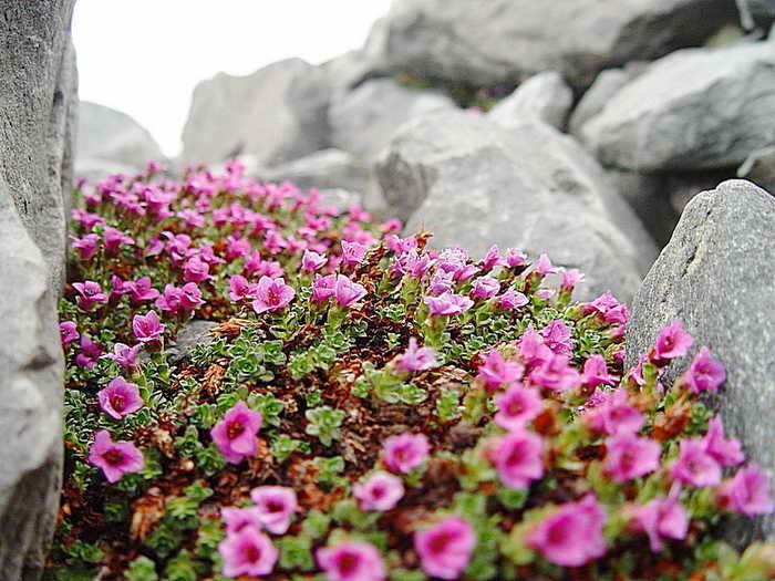 Природный парк Ергаки. Фото: Евгений Жулин
