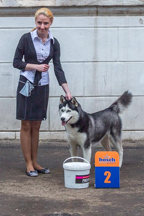 Всероссийская выставка собак прошла в Рязани. Фото: Сергей Лучезарный/Великая Эпоха (The Epoch Times)
