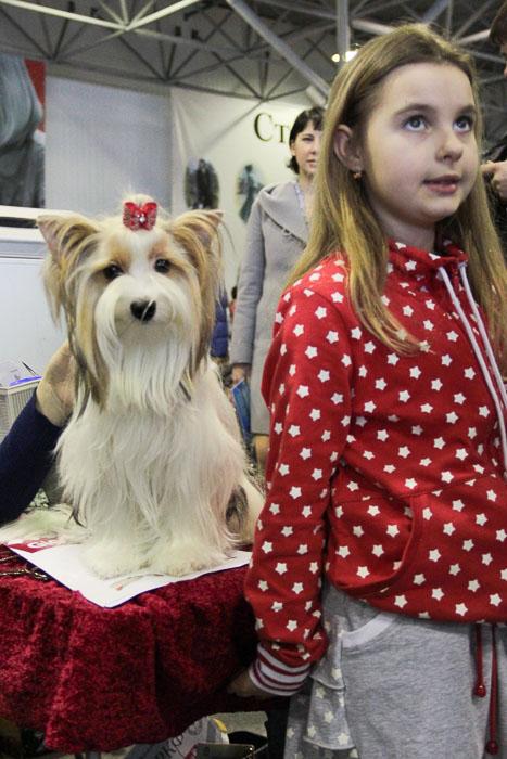 Международная выставка собак. «Зоомир Юга России-2013». Фото: Александр Трушников/Великая Эпоха (The Epoch Times)
