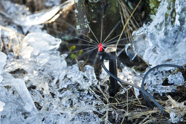 Флорида: урожай цитрусовых под угрозой. Микроразбрызгиватель.  Фото: Matt Stroshane/Getty Images