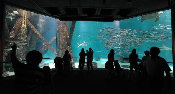 Утечка нефти в Мексиканском заливе из поврежденной буровой скважины продолжается. Подводный мир океана под угрозой гибели.. Фото:  MARK RALSTON/AFP/Getty Images