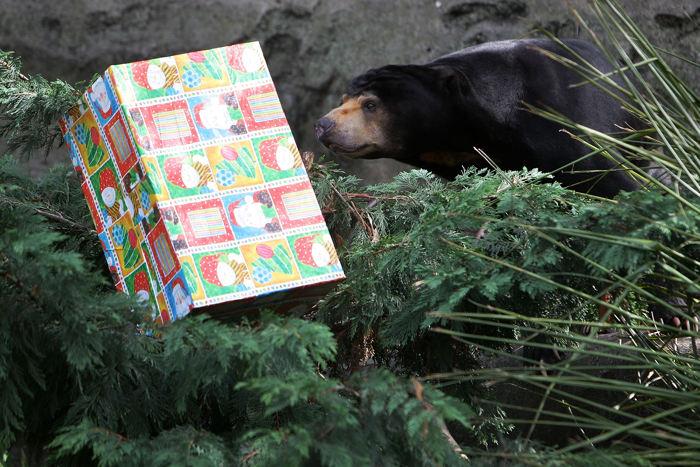 Рождество в зоопарке Сиднея. Фото: Lisa Maree Williams/Getty Images