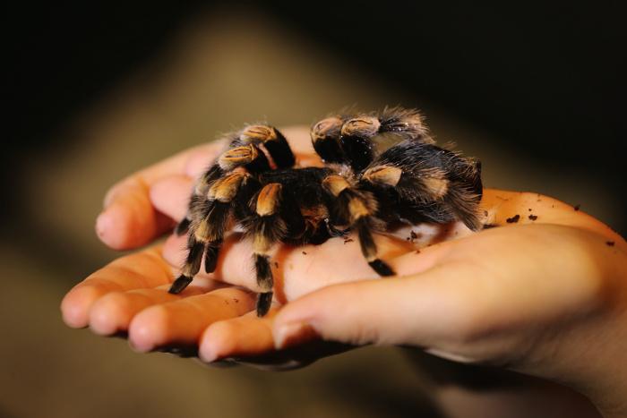 В зоопарке Лондона проводится инвентаризация животных. Фото: Dan Kitwood/Getty Images