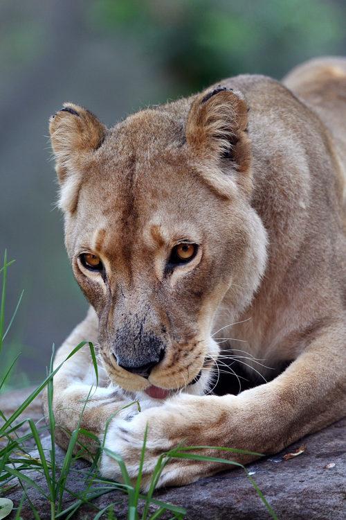 Зоопарк фото животных 3