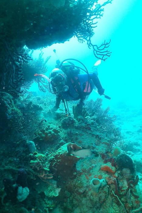 Дайвер Мириам Моран исследует риф в районе Палм-Бич. Фото: Myriam Moran