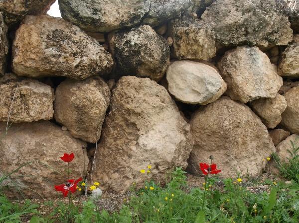 Путешествие по округам Бейт-Шемеша (Израиль). Фото: Хава ТОР/Великая Эпоха