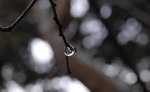 Осенний дождь. Лорина Дымова. Фото-Стихо-Творения. Фото: Хава ТОР/Великая Эпоха