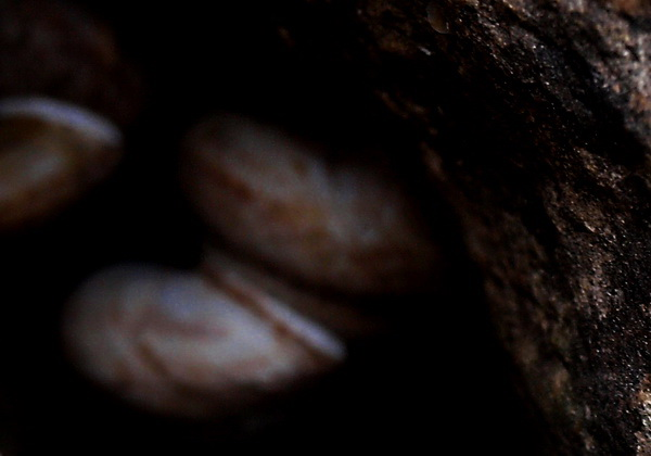 Ворона. Фото-Стихо-Творения. Фото: Хава ТОР/Великая Эпоха