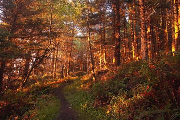 Лес в Национальном парке Олимпик. Фото: Джейсон Сэмпсон