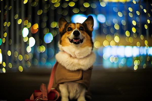 Рыжая осенняя собака. Фото: Moaan