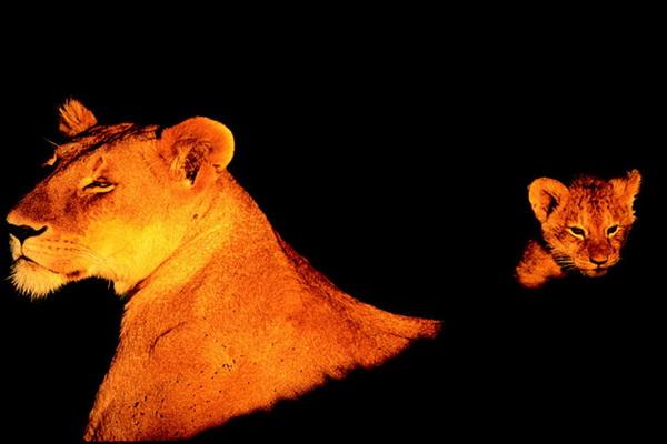 Львица с детенышем. Фото: Paul Goldstein/Exodus Travels