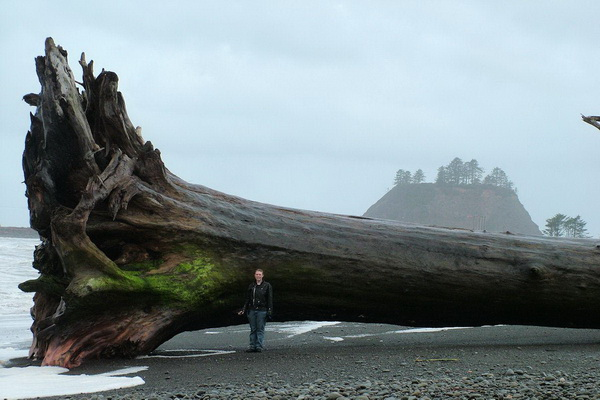 Дерево секвойи, прибитое к берегу, на пляже Ла Пуш, Клаллам Каунти, Вашингтон. Фото сделано 15 июня 2010 года. Фото с сайта: bigpicture.ru