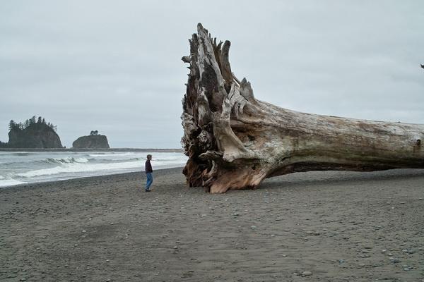 Дерево на пляже Ла Пуш 21 мая 2009 года. Фото с сайта: bigpicture.ru