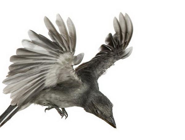 Птицы Эндрю Зукермана. Фото с сайта: 2photo.ru