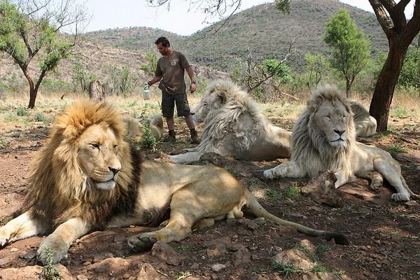 Кевин Ричардсон обрызгивает своих львов водой. Фото: Denis Farrell/ AP Photo